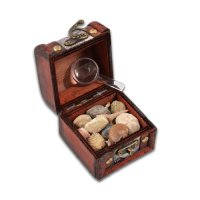 Fossil Hunters Treasure Chest