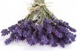 Lavender Pure Aromatherapy Essential Oil - 10Ml