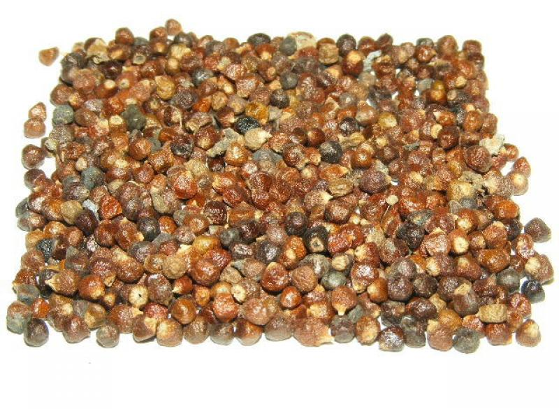 Grains Of Paradise 25Gm