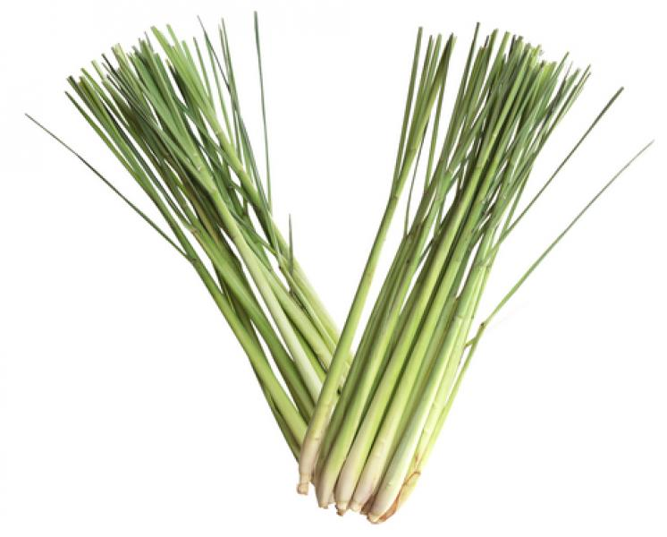 Lemongrass Pure Aromatherapy Essential Oil - 10Ml